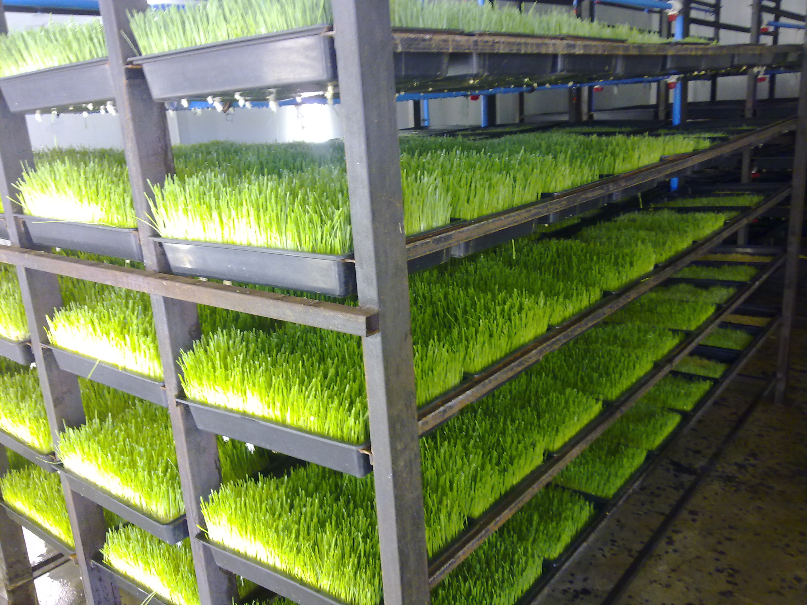 Qwikgro Undertaking R13 8 Million Qatar Aeroponic Fodder